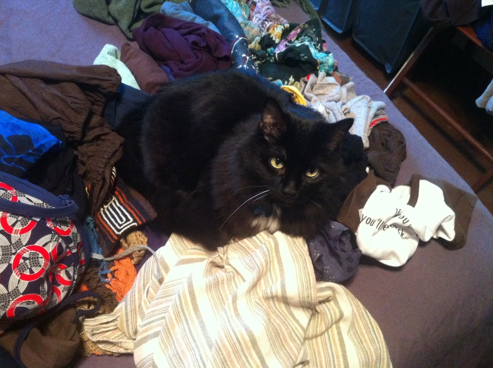 fatty on clothes